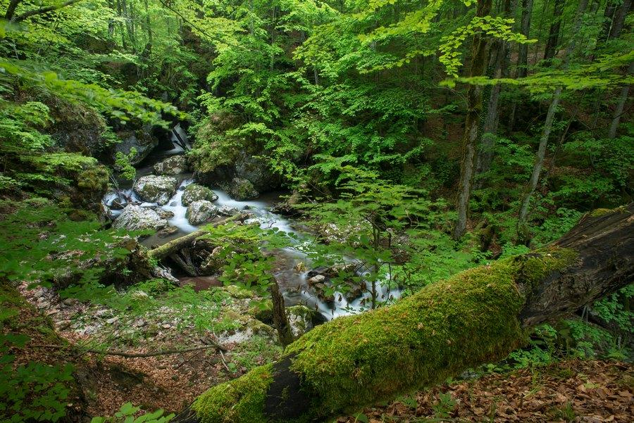 Uholka Ancient Forest - Ukraine